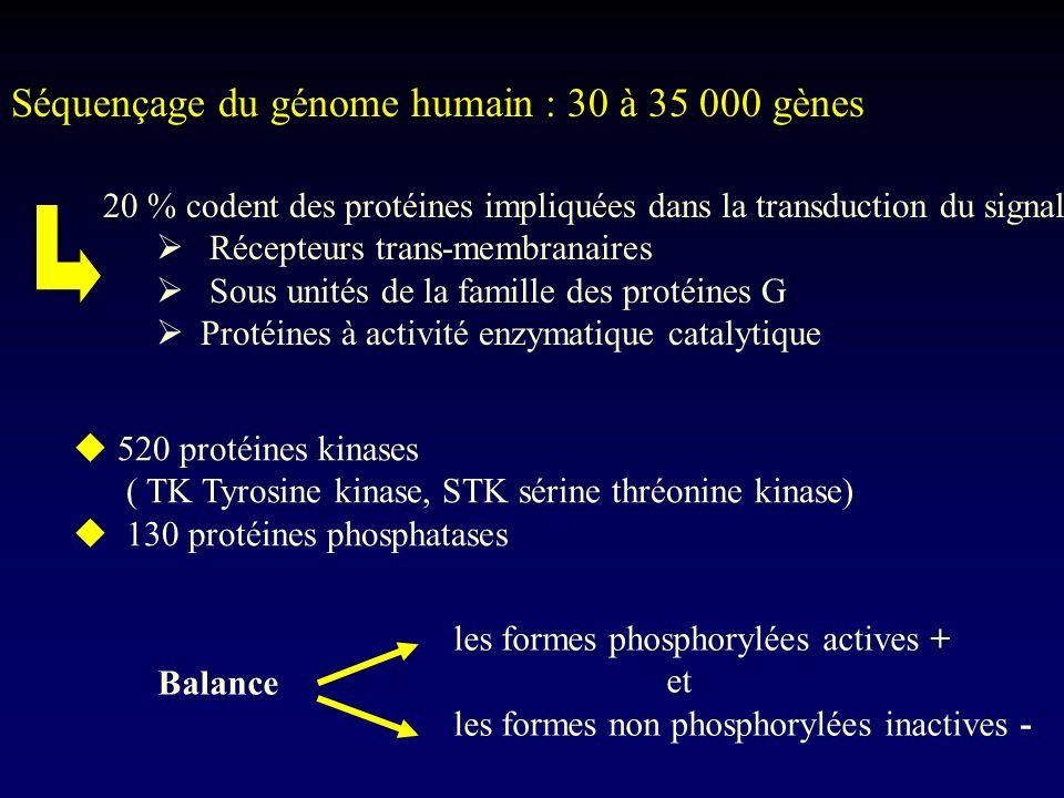 Séquençage du génome humain : 30 à 35 000 gènes