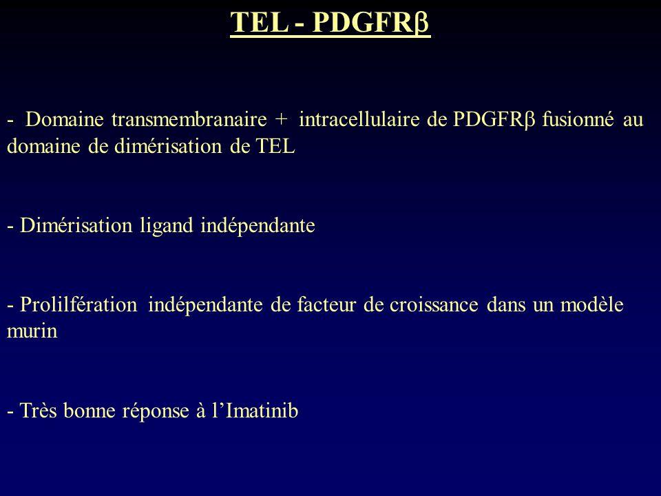 TEL - PDGFR - Domaine transmembranaire + intracellulaire de PDGFR fusionné au domaine de dimérisation de TEL.