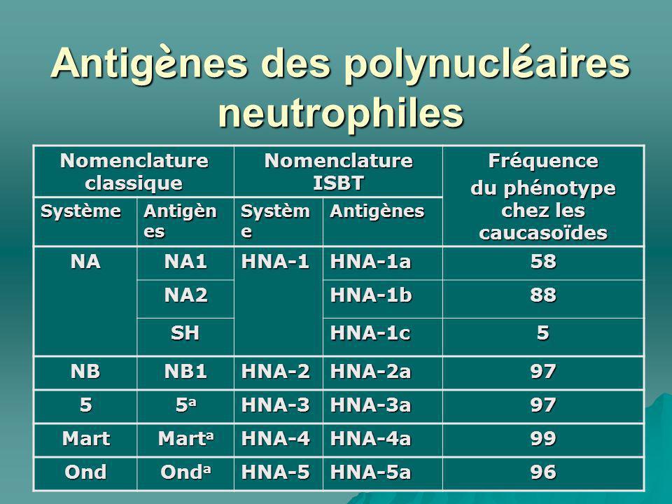 Antigènes des polynucléaires neutrophiles