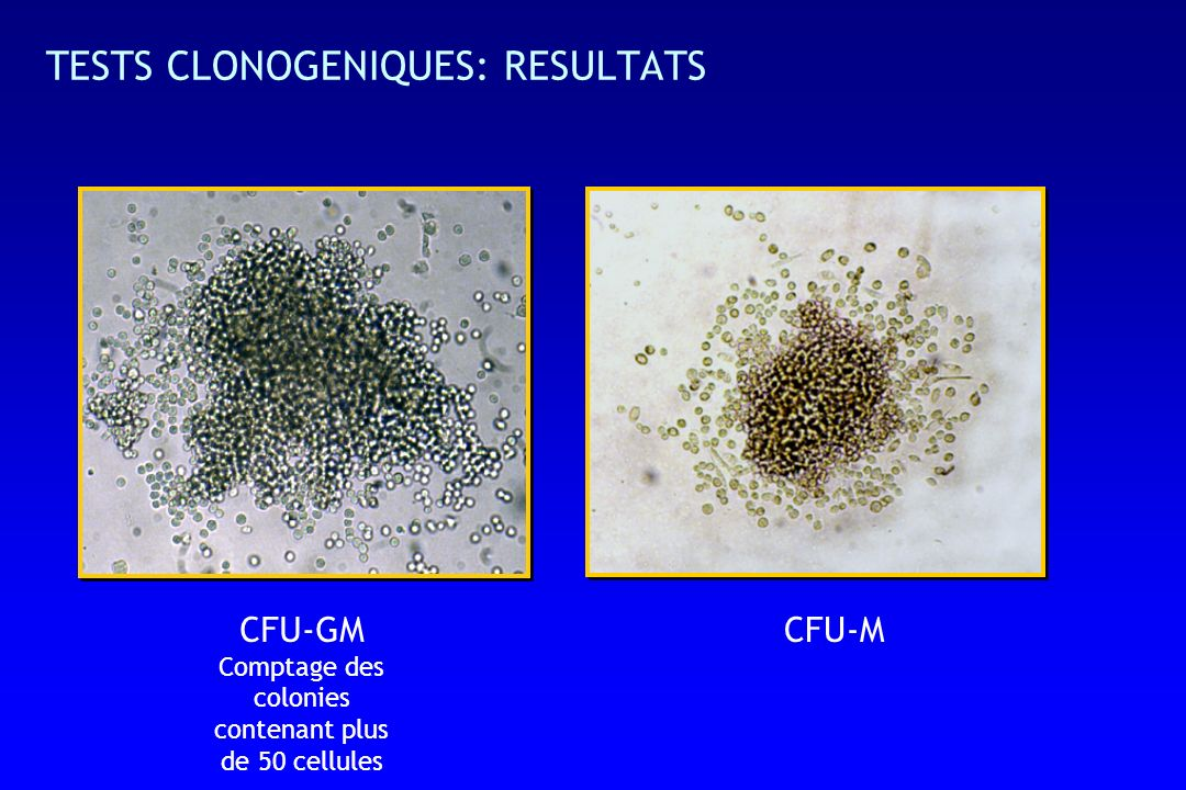 TESTS CLONOGENIQUES: RESULTATS