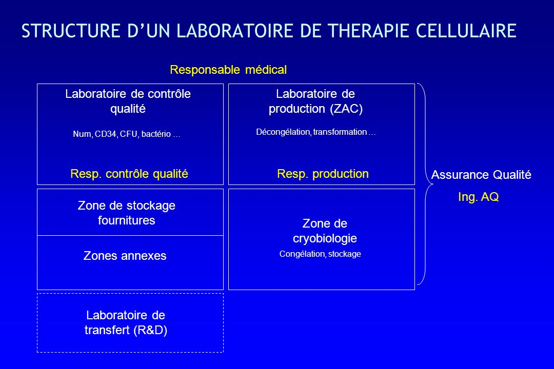 STRUCTURE D'UN LABORATOIRE DE THERAPIE CELLULAIRE