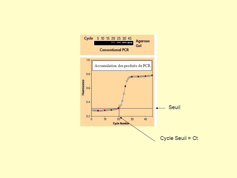 Accumulation des produits de PCR