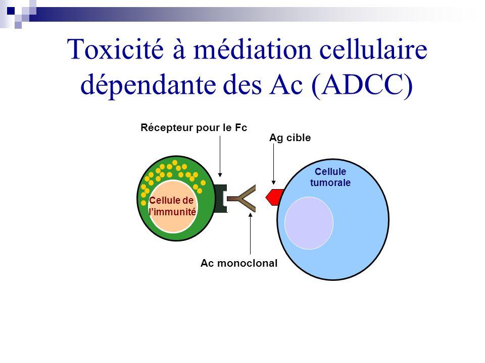Toxicité à médiation cellulaire dépendante des Ac (ADCC)