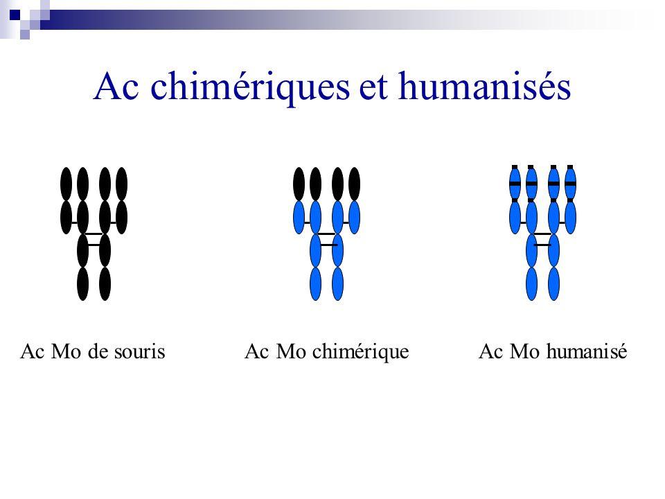 Ac chimériques et humanisés