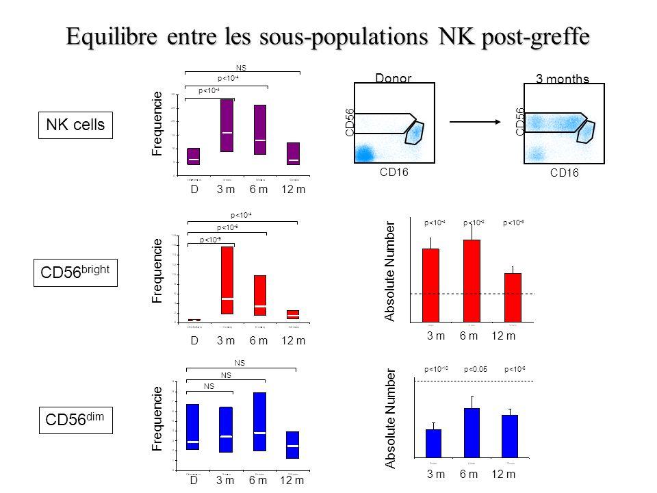 Equilibre entre les sous-populations NK post-greffe