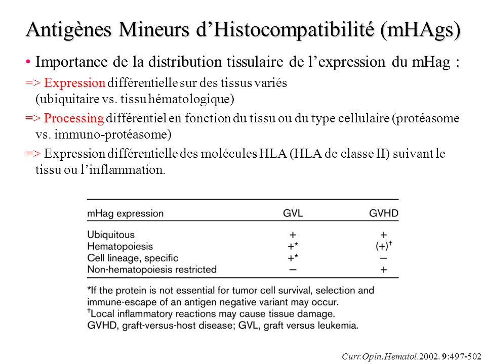 Antigènes Mineurs d'Histocompatibilité (mHAgs)