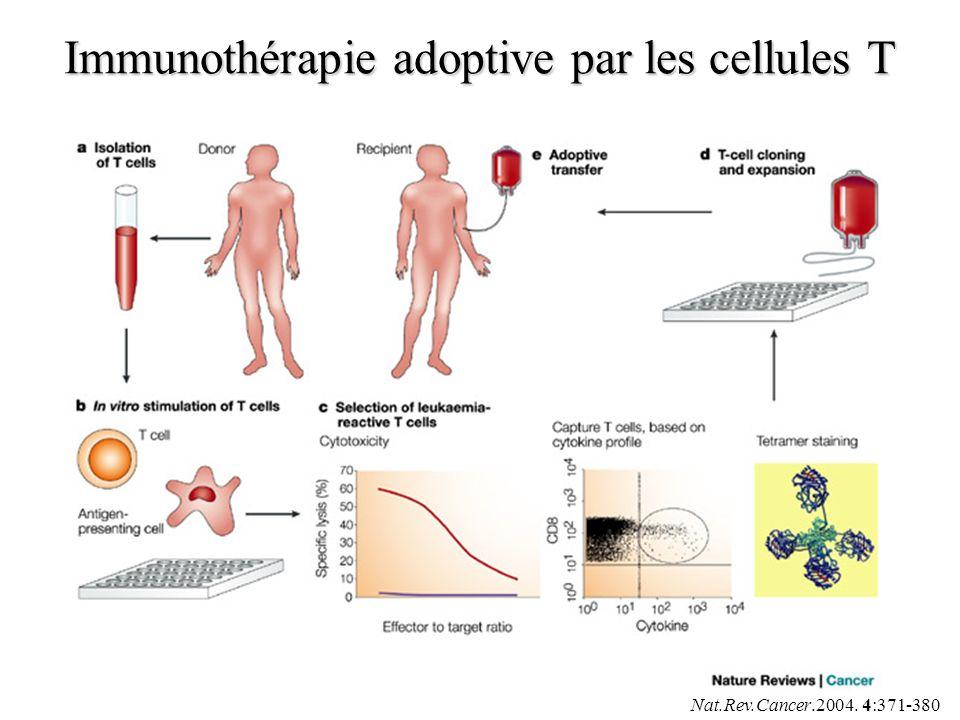 Immunothérapie adoptive par les cellules T