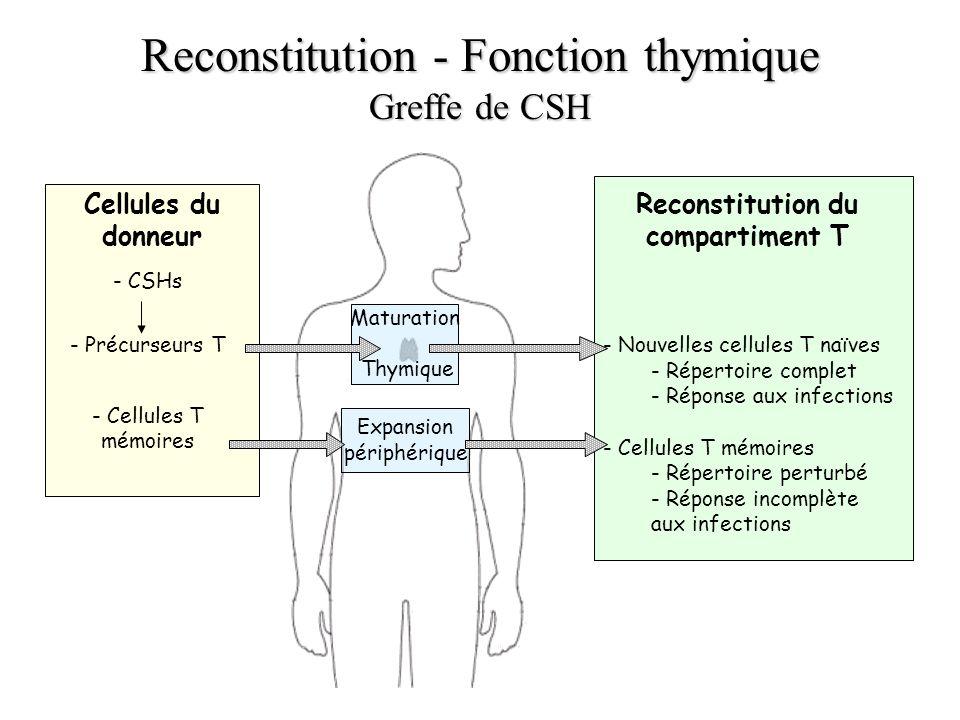 Reconstitution du compartiment T