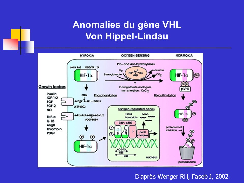 Anomalies du gène VHL Von Hippel-Lindau