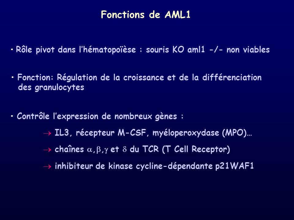 Fonctions de AML1Rôle pivot dans l'hématopoïèse : souris KO aml1 -/- non viables. Contrôle l'expression de nombreux gènes :