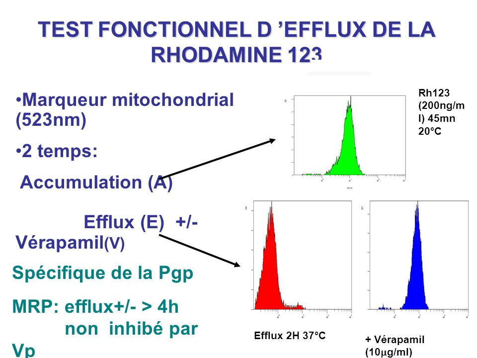 TEST FONCTIONNEL D 'EFFLUX DE LA RHODAMINE 123