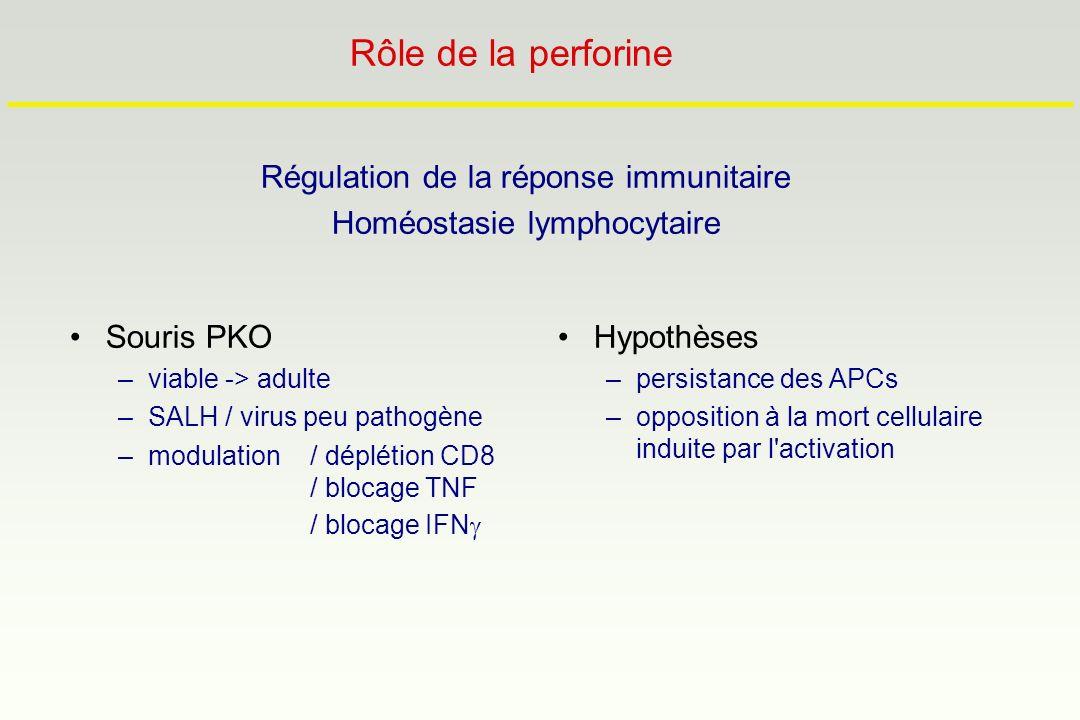 Rôle de la perforine Régulation de la réponse immunitaire