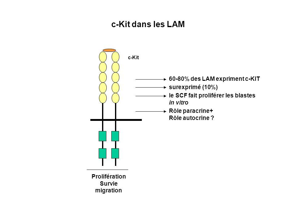 c-Kit dans les LAM 60-80% des LAM expriment c-KIT surexprimé (10%)