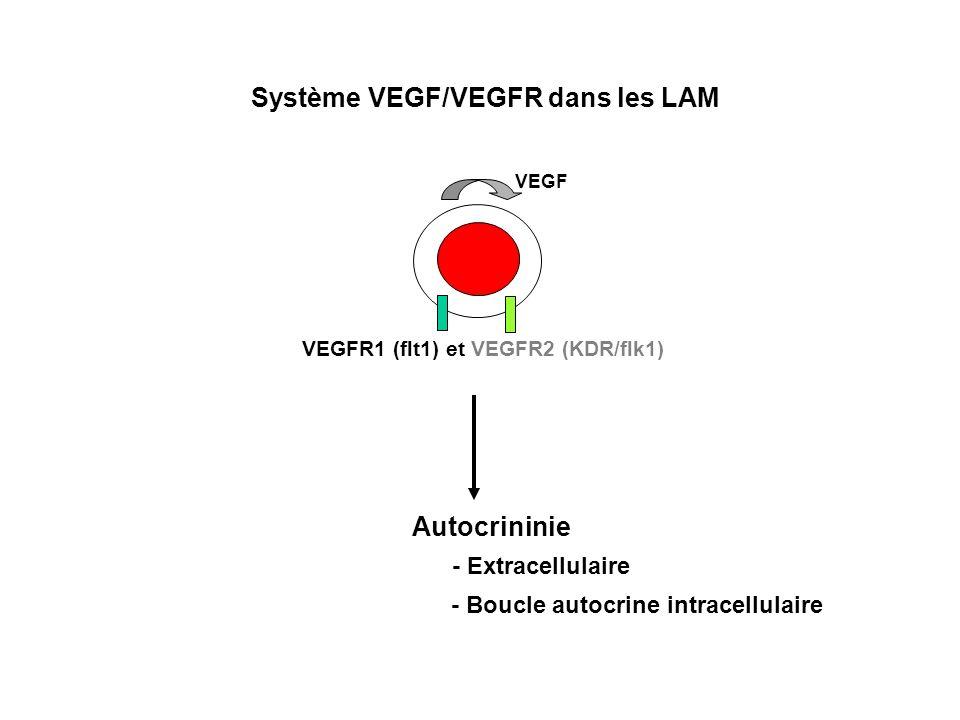 Système VEGF/VEGFR dans les LAM
