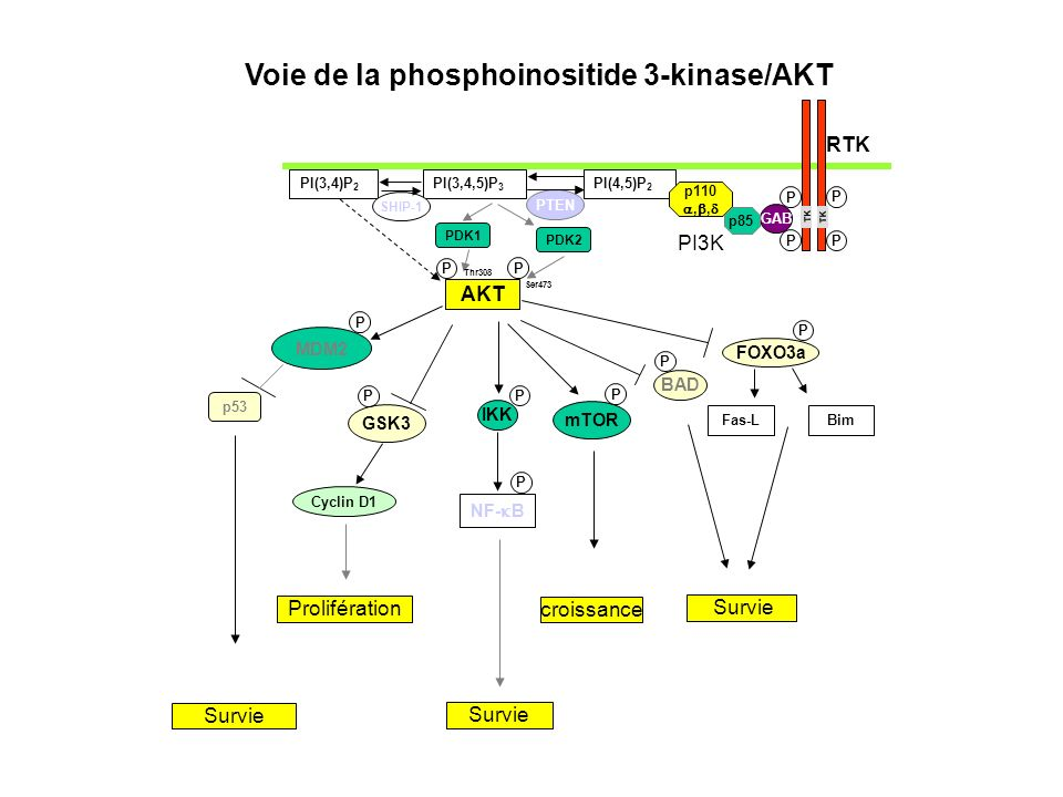 Voie de la phosphoinositide 3-kinase/AKT