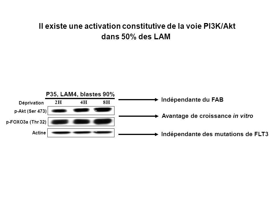 Il existe une activation constitutive de la voie PI3K/Akt