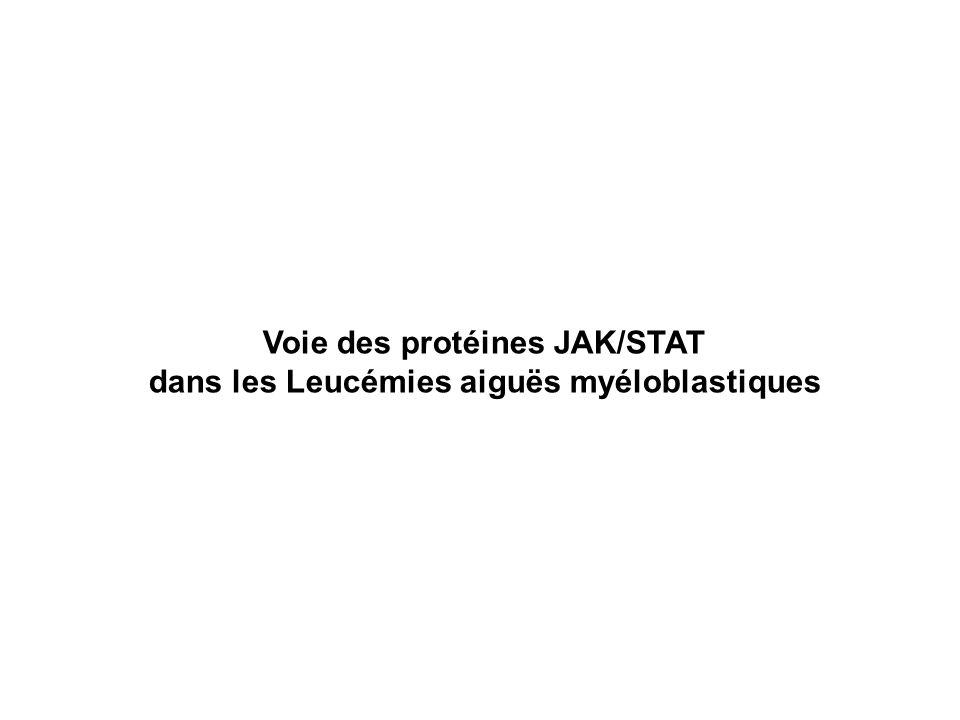 Voie des protéines JAK/STAT dans les Leucémies aiguës myéloblastiques