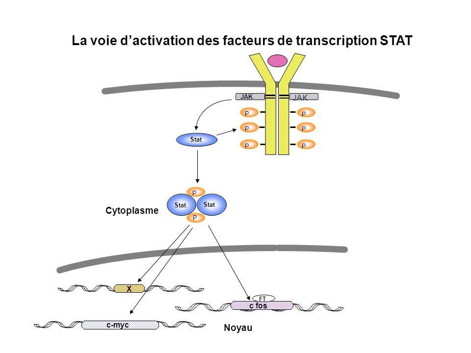 La voie d'activation des facteurs de transcription STAT