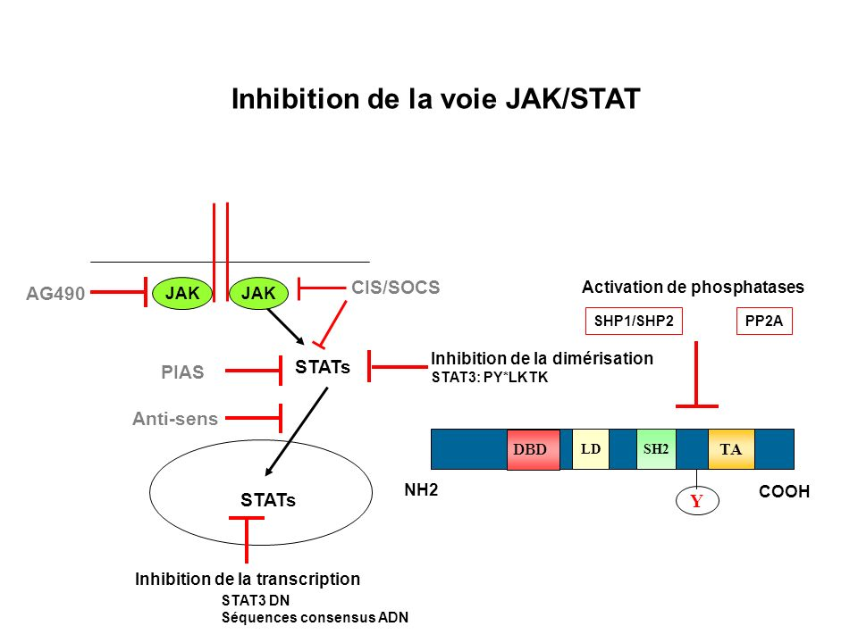 Inhibition de la voie JAK/STAT