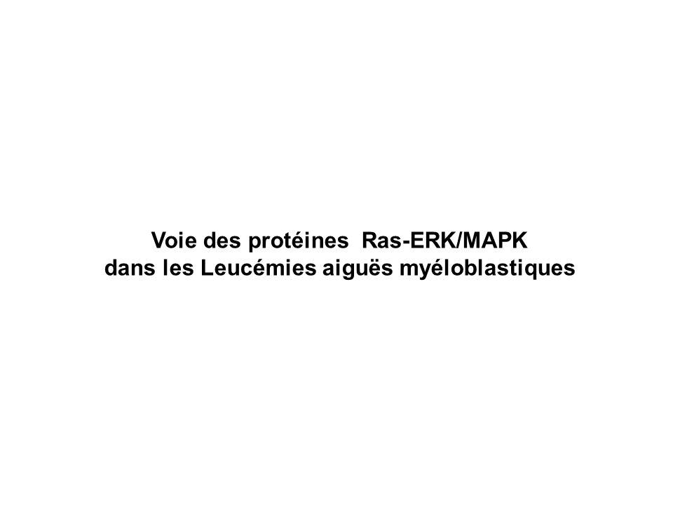 Voie des protéines Ras-ERK/MAPK