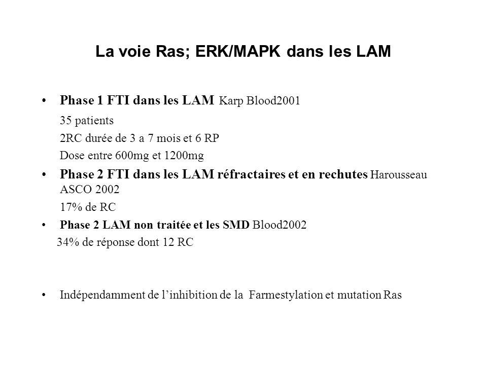 La voie Ras; ERK/MAPK dans les LAM