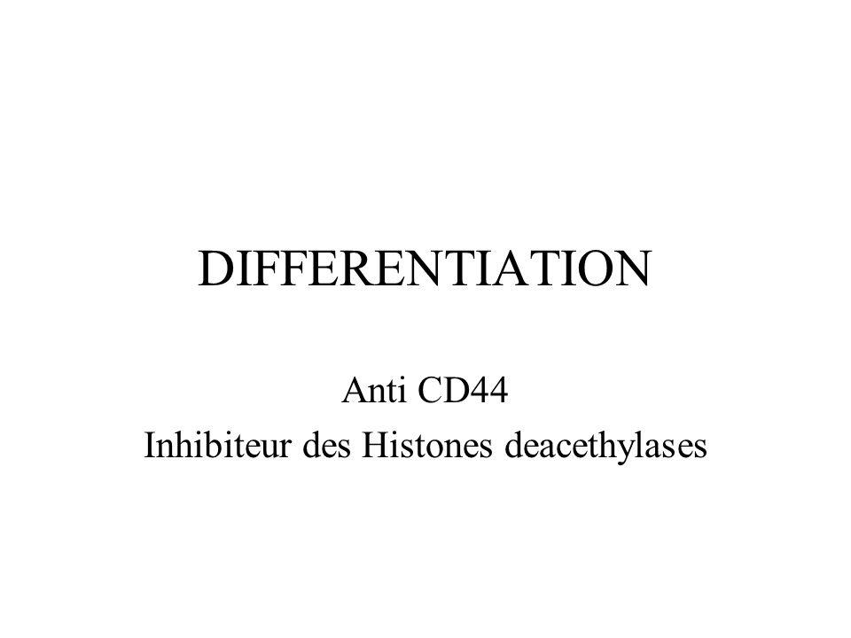 Anti CD44 Inhibiteur des Histones deacethylases