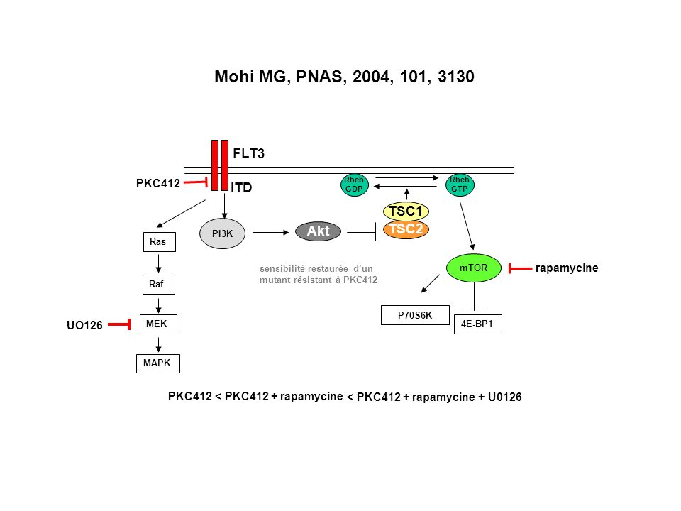 Mohi MG, PNAS, 2004, 101, 3130 FLT3 ITD TSC1 Akt TSC2 PKC412
