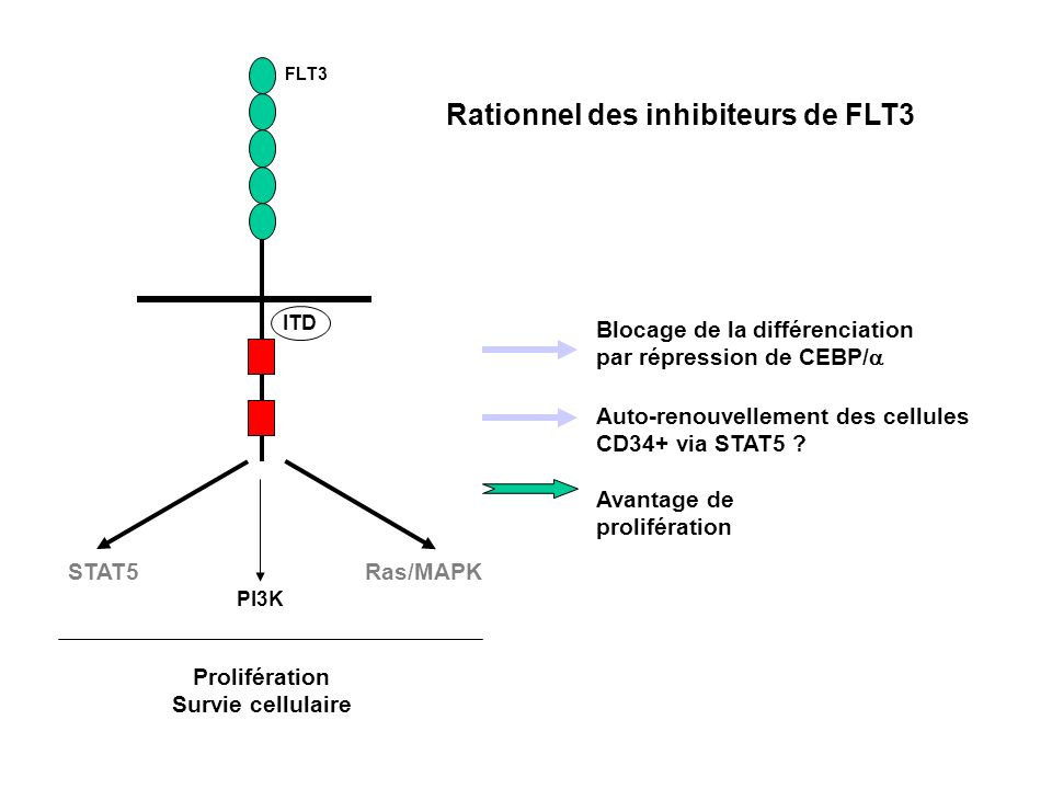 Rationnel des inhibiteurs de FLT3