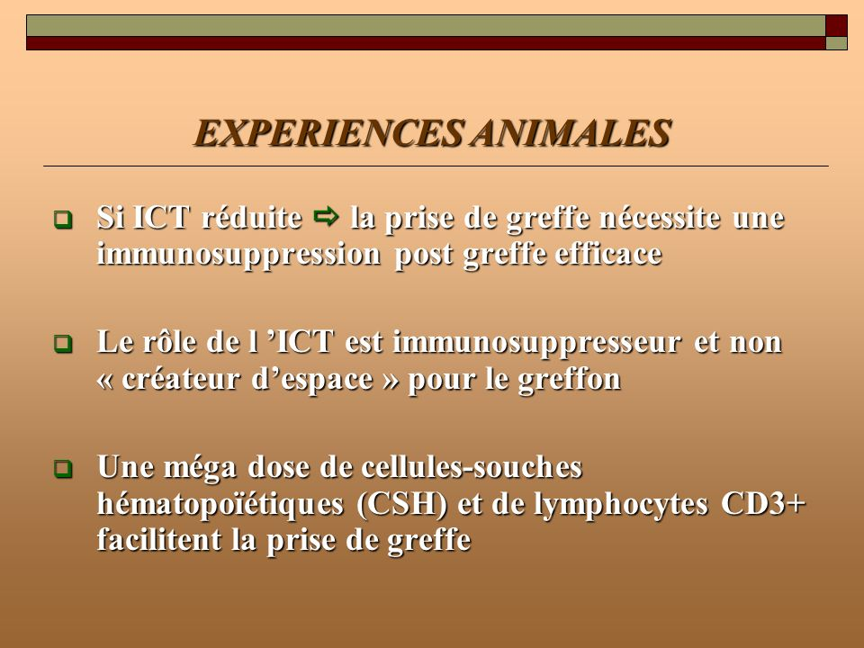 EXPERIENCES ANIMALES Si ICT réduite  la prise de greffe nécessite une immunosuppression post greffe efficace.