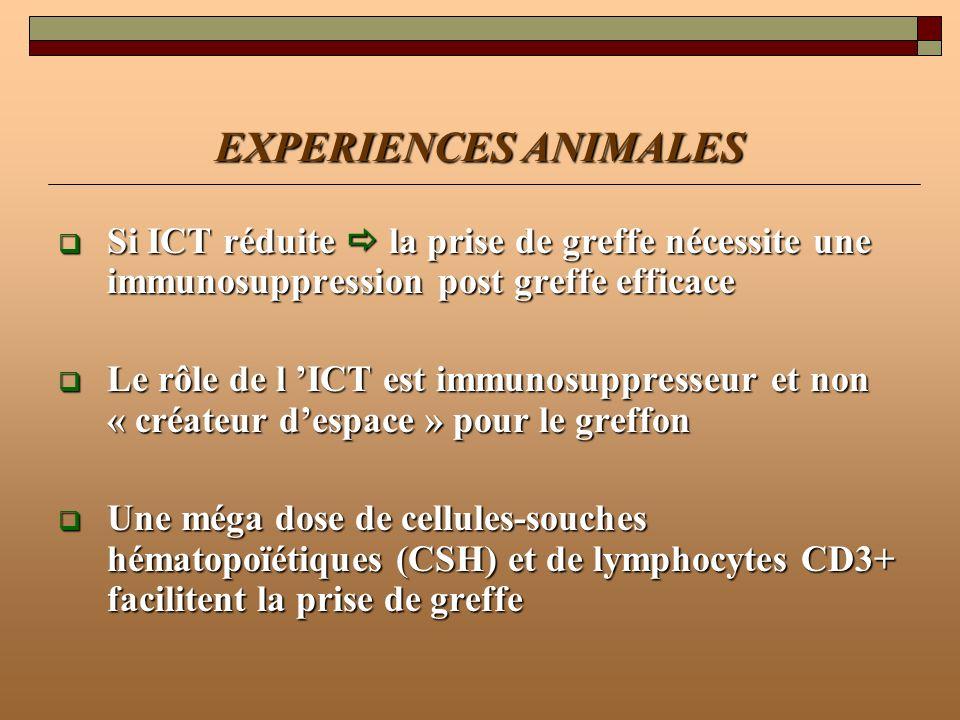EXPERIENCES ANIMALESSi ICT réduite  la prise de greffe nécessite une immunosuppression post greffe efficace.