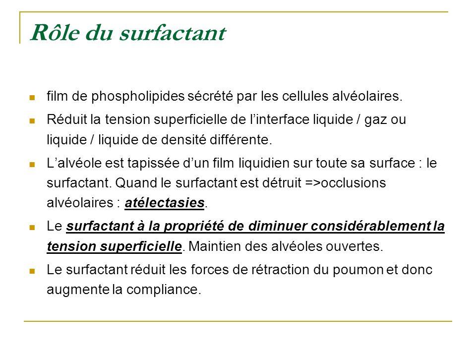 Rôle du surfactant film de phospholipides sécrété par les cellules alvéolaires.