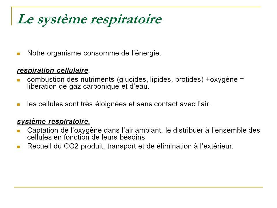 Le système respiratoire