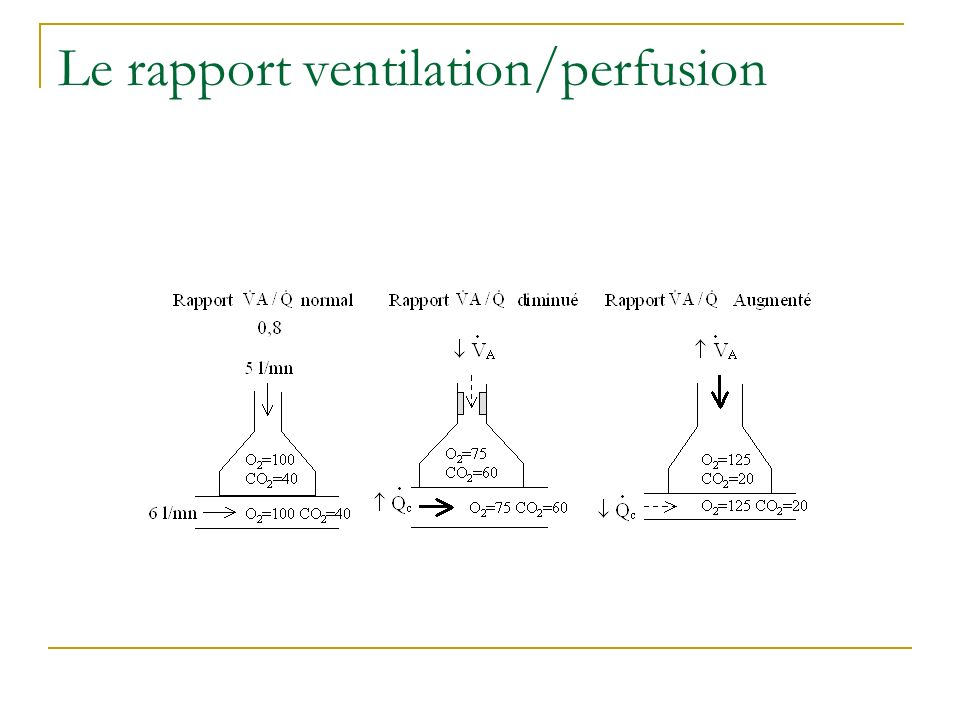 Le rapport ventilation/perfusion