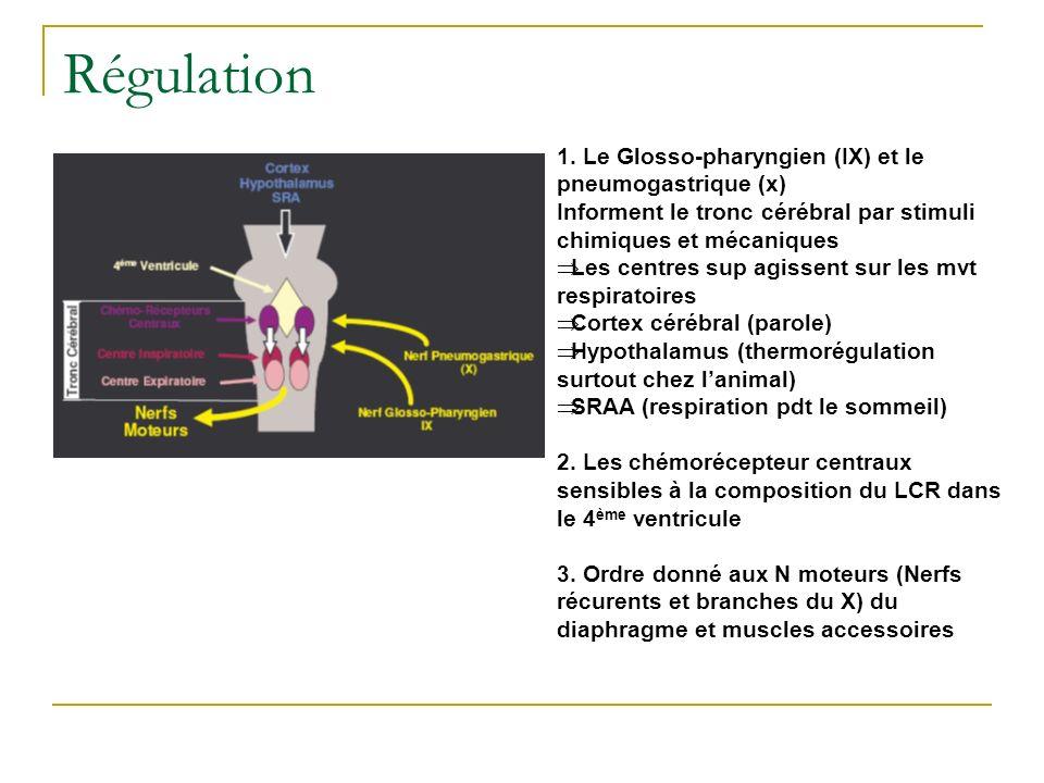 Régulation 1. Le Glosso-pharyngien (IX) et le pneumogastrique (x)