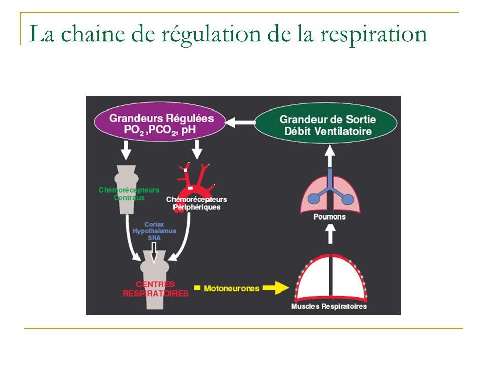 La chaine de régulation de la respiration