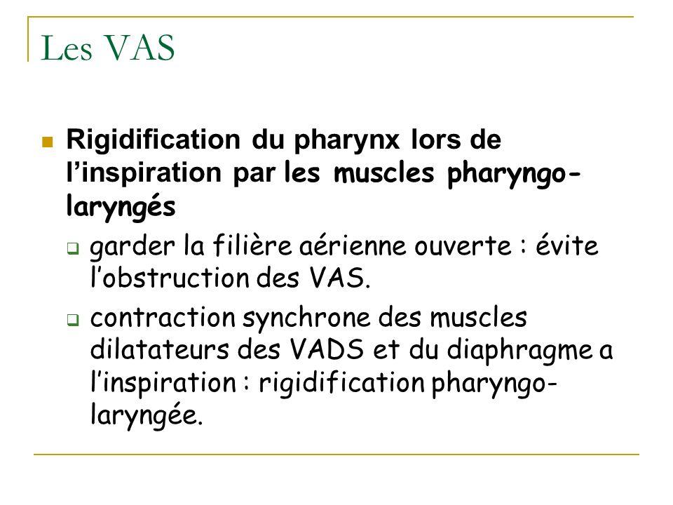 Les VAS Rigidification du pharynx lors de l'inspiration par les muscles pharyngo-laryngés.