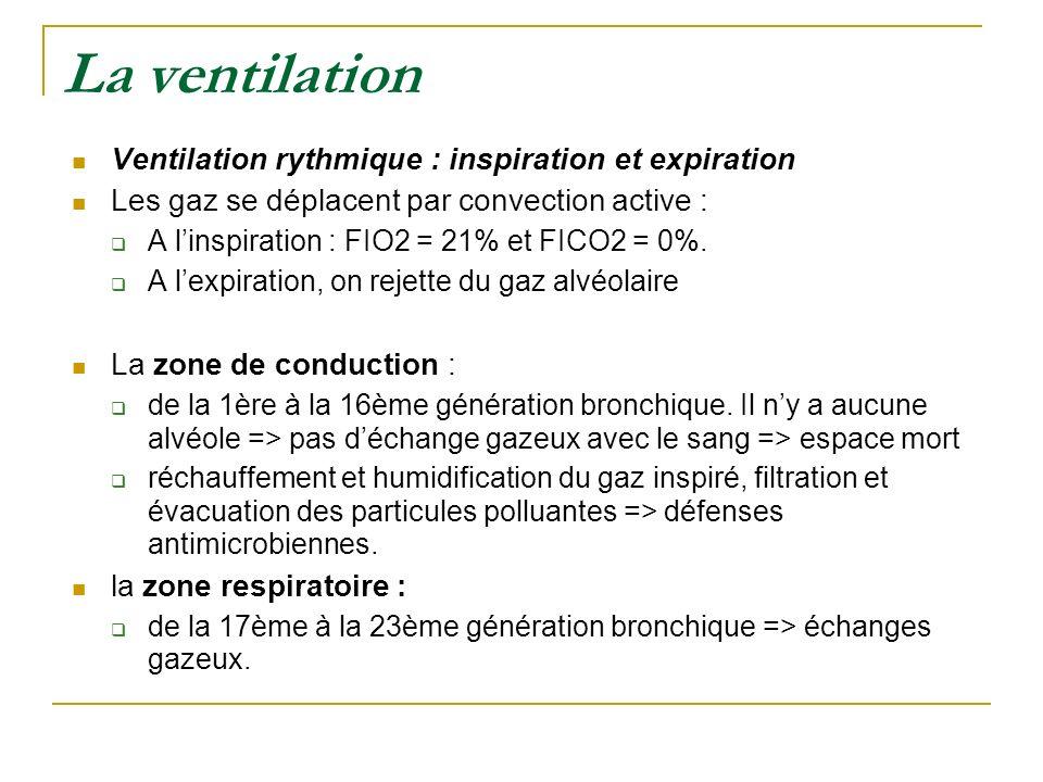 La ventilation Ventilation rythmique : inspiration et expiration