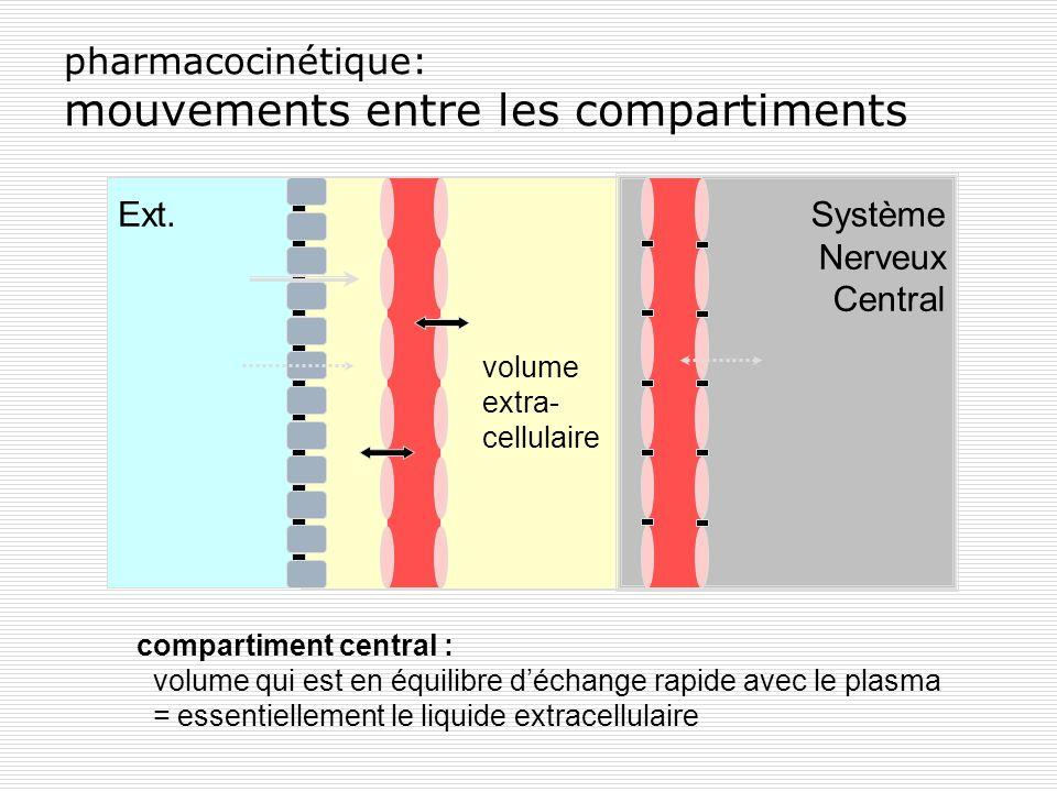 pharmacocinétique: mouvements entre les compartiments