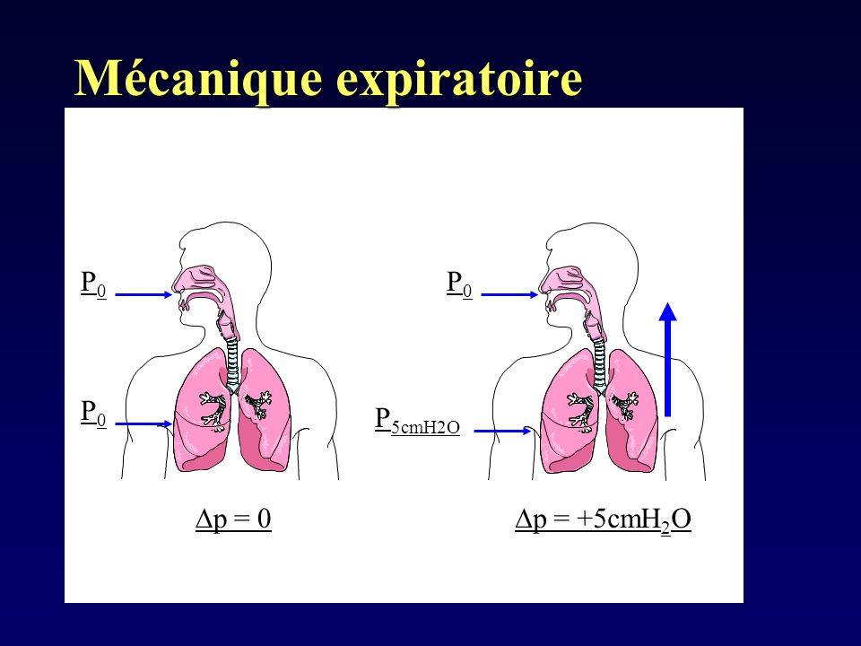 Mécanique expiratoire