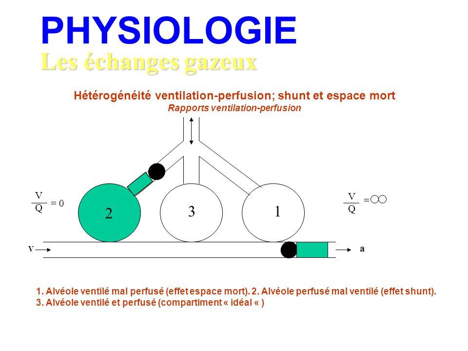 PHYSIOLOGIE Les échanges gazeux 2 3 1