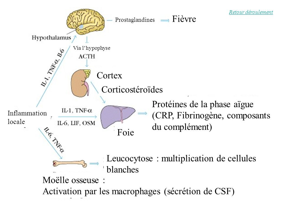 Protéines de la phase aïgue (CRP, Fibrinogène, composants