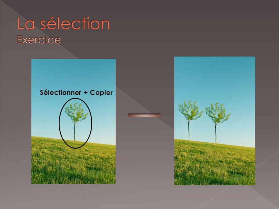 La sélection Exercice Sélectionner + Copier