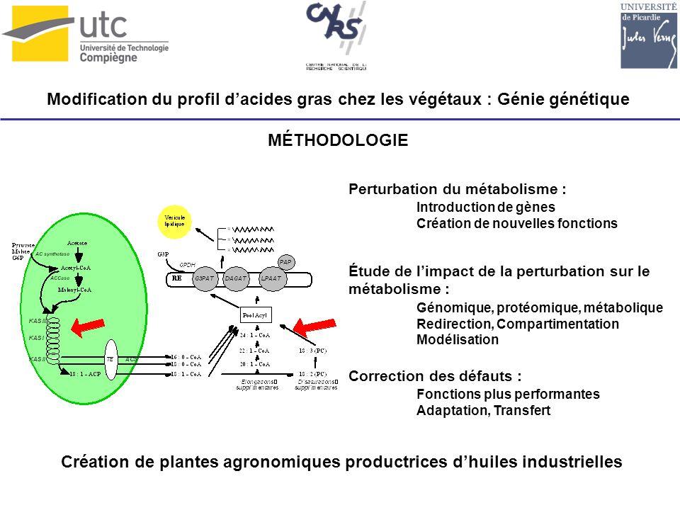 Création de plantes agronomiques productrices d'huiles industrielles