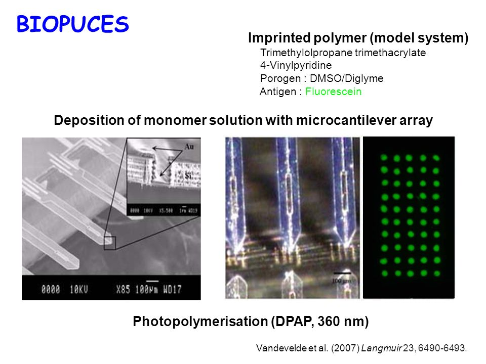 BIOPUCES Imprinted polymer (model system)