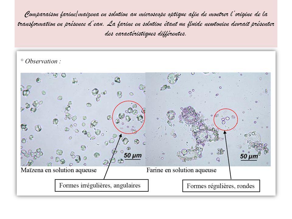 Comparaison farine/maizena en solution au microscope optique afin de montrer l'origine de la transformation en présence d'eau.