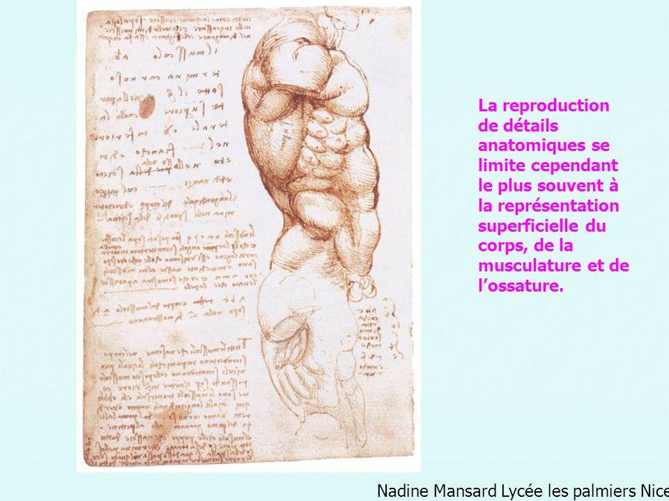 La reproduction de détails anatomiques se limite cependant le plus souvent à la représentation superficielle du corps, de la musculature et de l'ossature.
