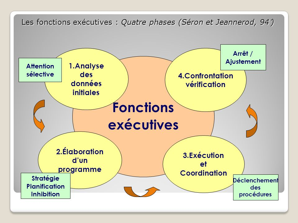 Les fonctions exécutives : Quatre phases (Séron et Jeannerod, 94')