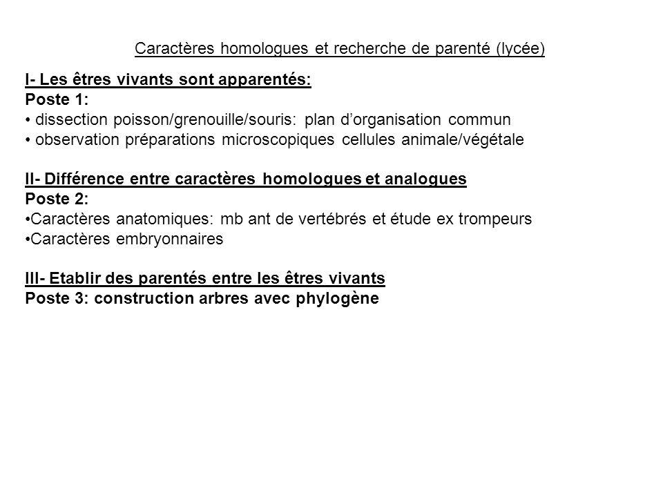 Caractères homologues et recherche de parenté (lycée)