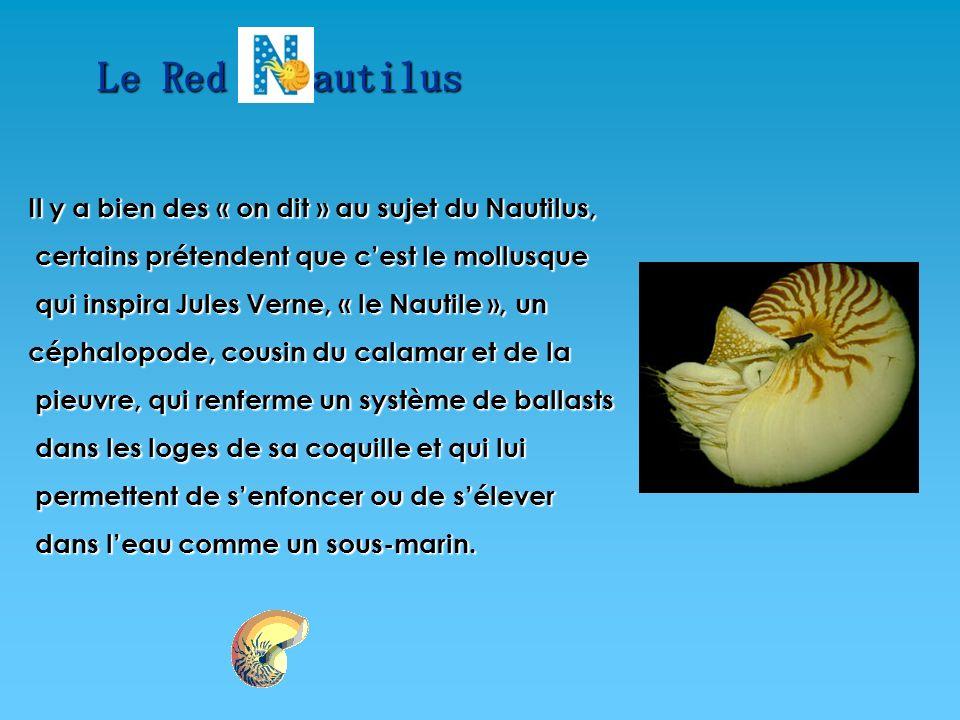 Le Red autilus Il y a bien des « on dit » au sujet du Nautilus,