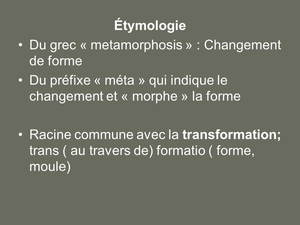 Étymologie Du grec « metamorphosis » : Changement de forme. Du préfixe « méta » qui indique le changement et « morphe » la forme.